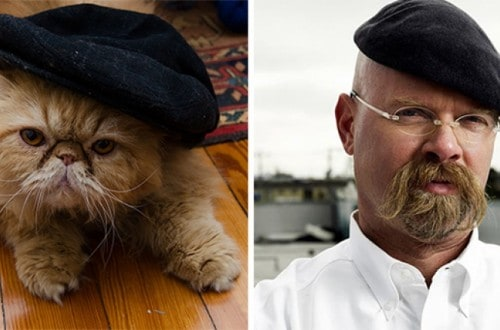 13 Cats That Look Like Other Things