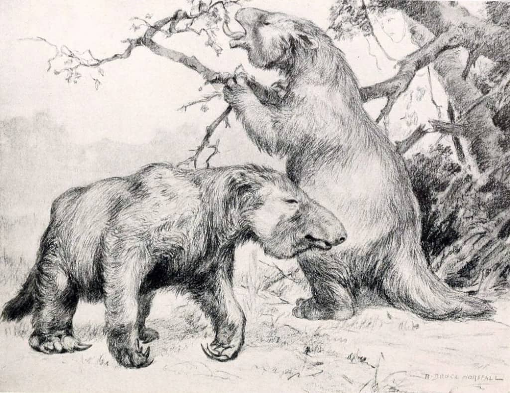 Image of: Animals Coloring Giant Ground Sloth Online Science Mall 14 Extinct Animals We Could Clone Right Now