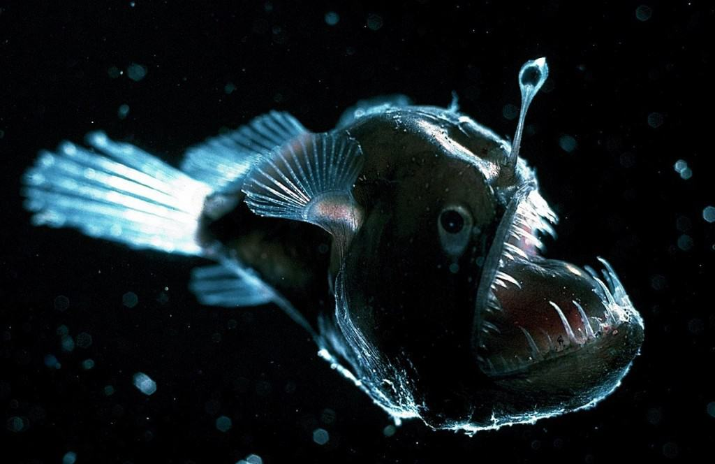 15 Of The Freakiest Deep-Sea Creatures