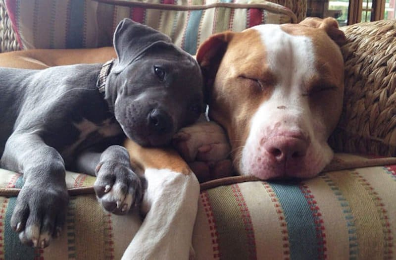 Best Big Dogs >> 20 Adorable Photos Of Dogs Being Best Friends