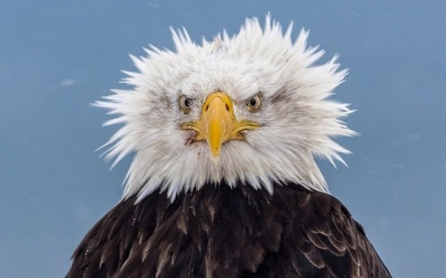 20 Animals Having A Bad Hair Day