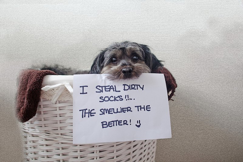 20 Dog Shaming Photos That Will Have You Cracking Up