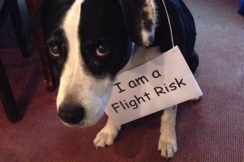 20 Dog Shaming Photos That Will Have You Cracking Up!