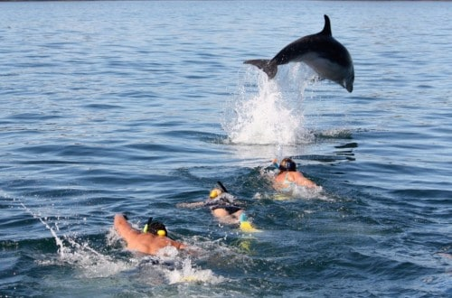 20 Fabulous Locations For Whale And Dolphin Watching