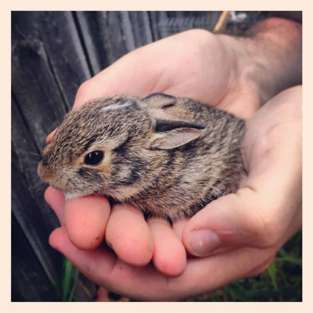 20 Of The Cutest Baby Animals That Will Fit In Your Hand