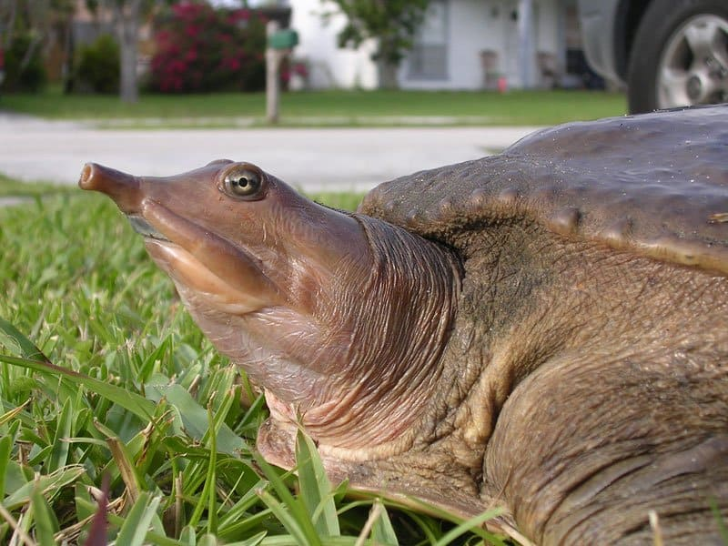 20 Of The Ugliest Animals On Earth - Page 3 of 5