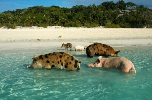 20 Places Where Animals Outnumber People