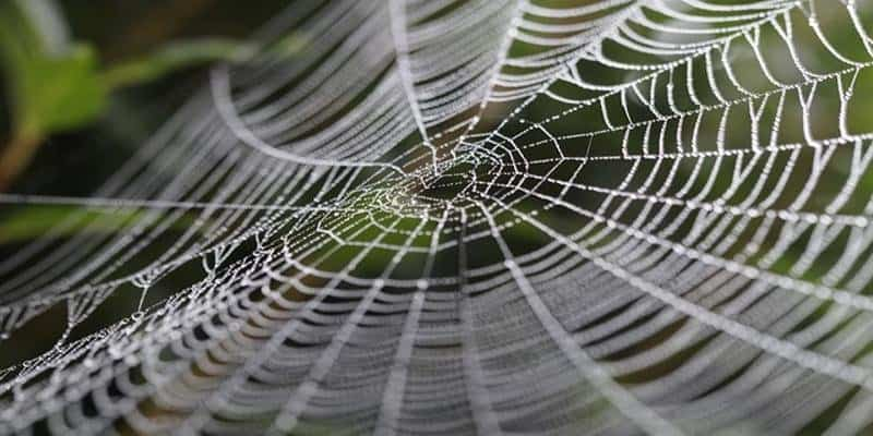 10 stunning illustrations of symmetry in nature