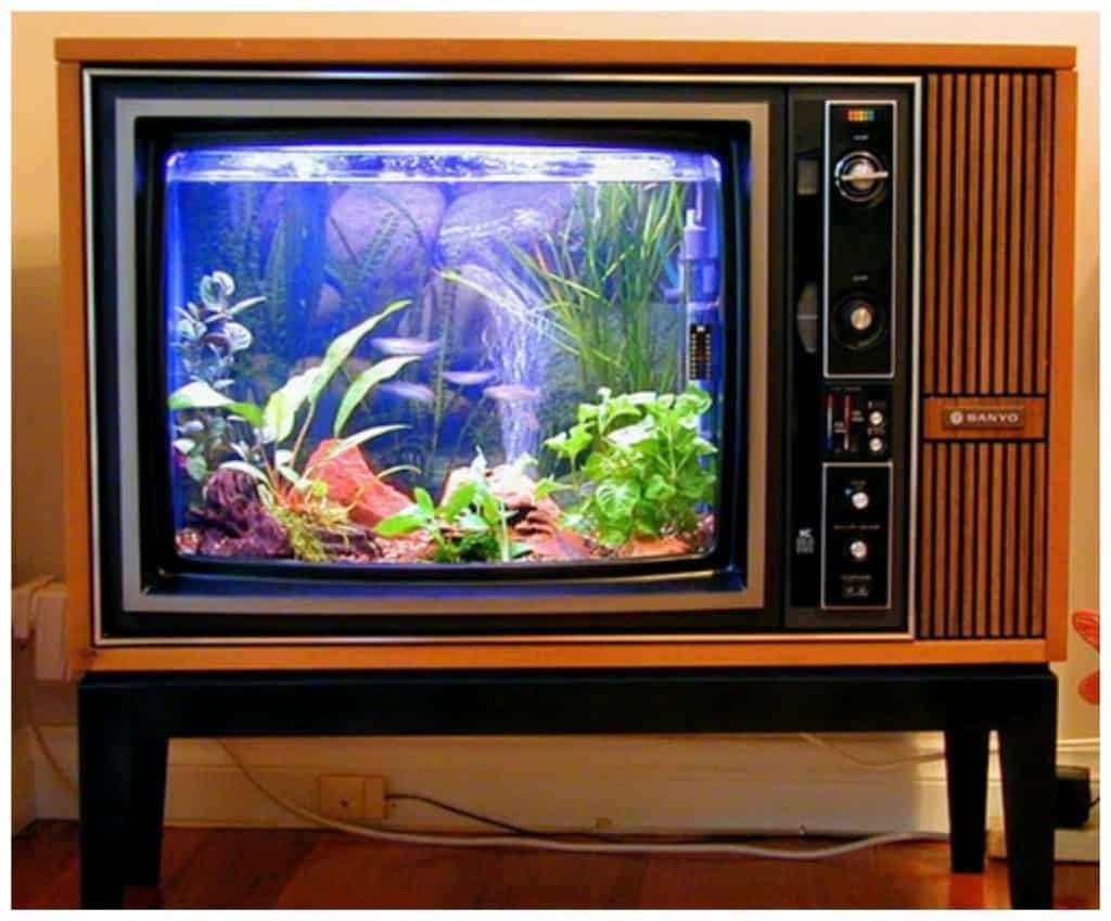 15 Cool Fish Tanks You Wish You Had