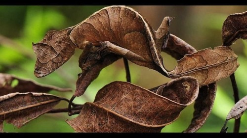 19 Amazing Animals Adept At Using Camouflage