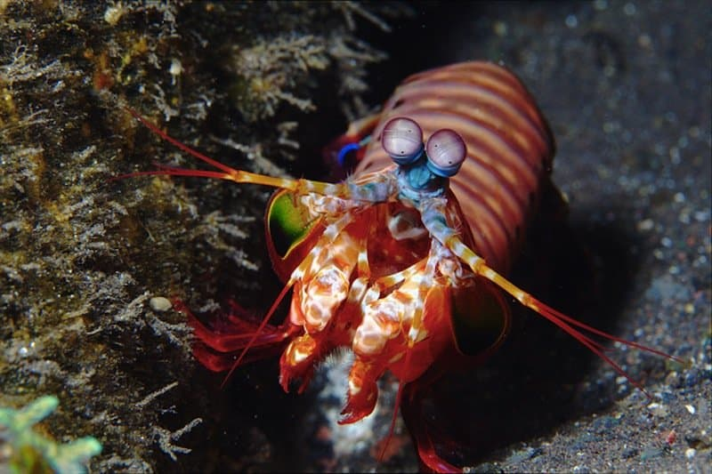 20 Animals And Sea Creatures With Amazing Abilities