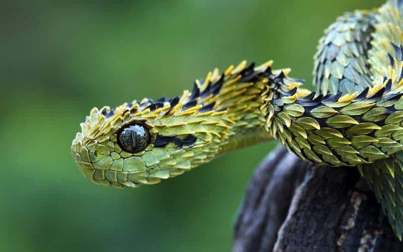Awesome snake names