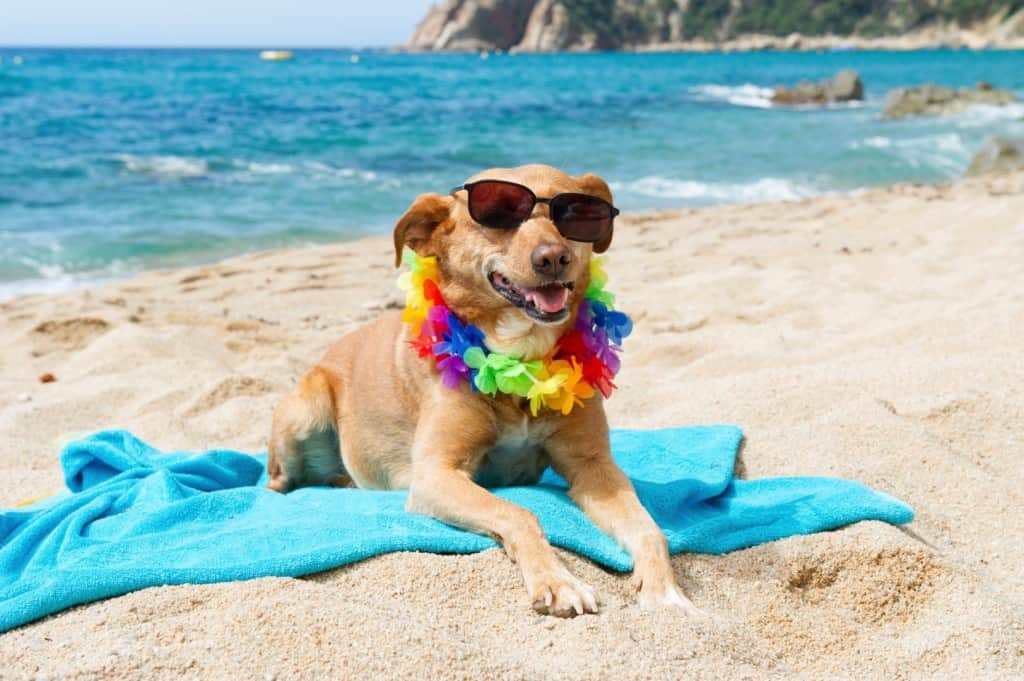 20 Dogs In Their Happy Place