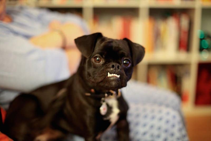 20 Dogs Who Rock Their...