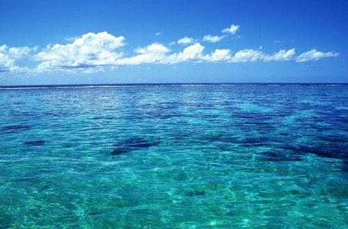15 Most Bizarre And Shocking Underwater Creatures