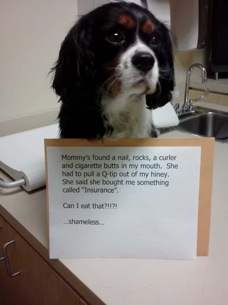 20 Hilarious And Adorable Pet Shaming Photos