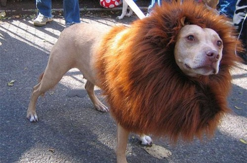 20 Hilarious Examples Of Dog Grooming