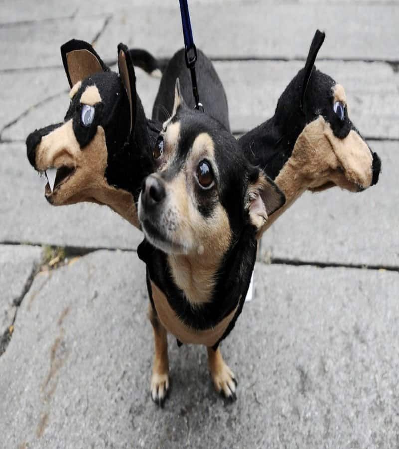 And Sometimes Three Heads Are Just Better Than One. & 20 Of The Best Dog Costumes You Will Ever See