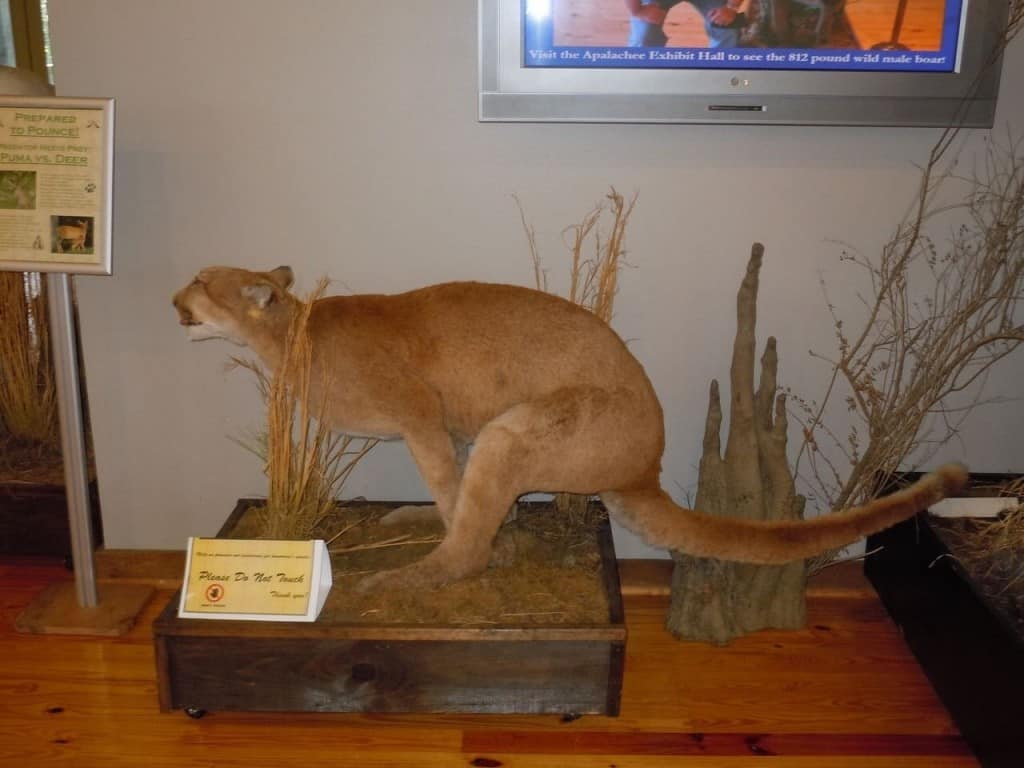 20 Of The Worst Taxidermy Animals Ever Created