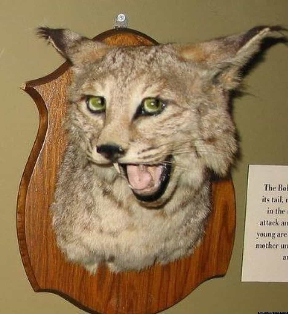 Who is a taxidermist