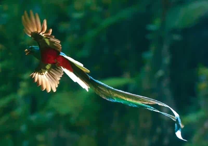 Quetzal Mayan Symbol 15 Of The Most Beautif...