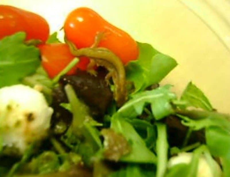 19 Disgusting Things People Found In Their Food