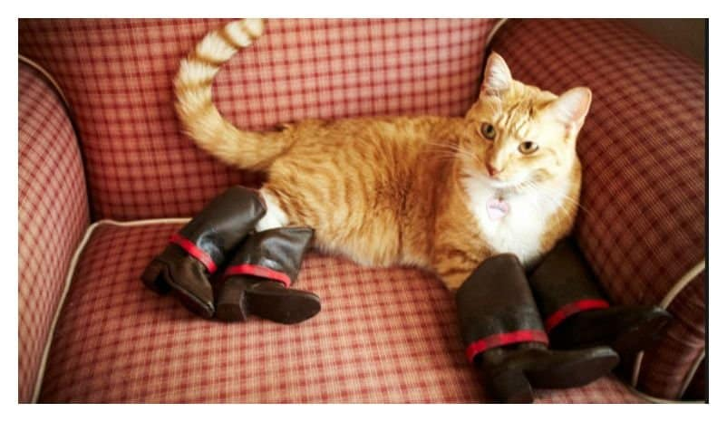 Cats And Leather Shoes