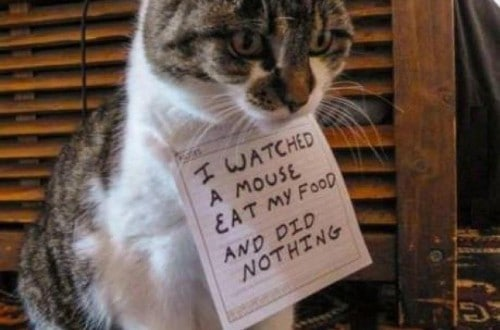 20 Of The Most Hilarious Cat Shaming Signs