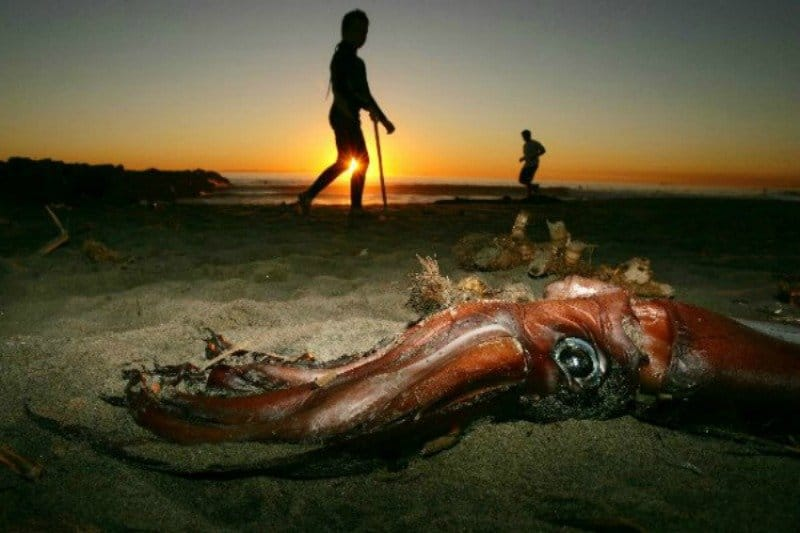 20 strangest things to wash ashore on beaches