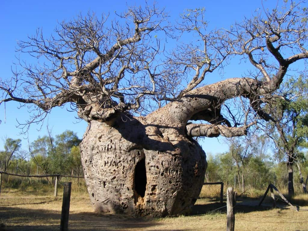 trees world Strange around the