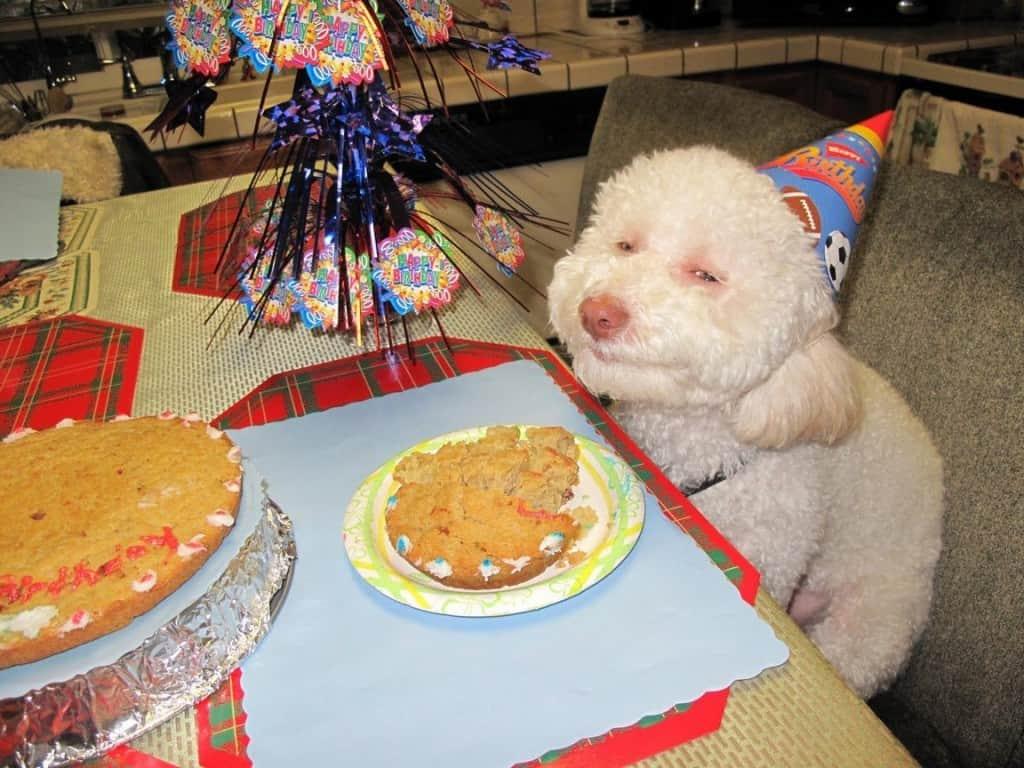 17 Cute And Funny Photos Of Animals Celebrating Birthdays