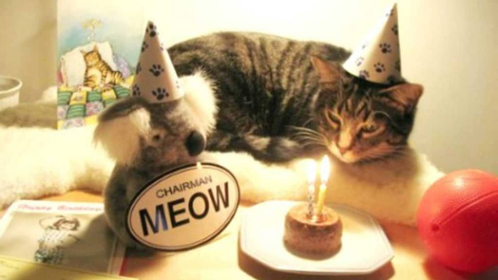 17 Cute And Funny Photos Of Animals Celebrating Birthdays