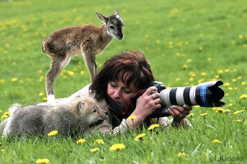 20 Adorable Animals That Want To Be Photographers