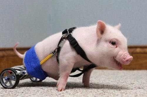20 Adorable Animals With Amazing Prosthetics