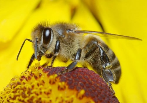 20 Amazing Things You Didn't Know About Bees