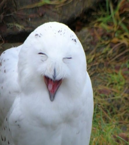 20 Animals Making Some Seriously Crazy Faces