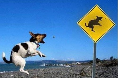 20 Of The Funniest Dog Photos Of All Time