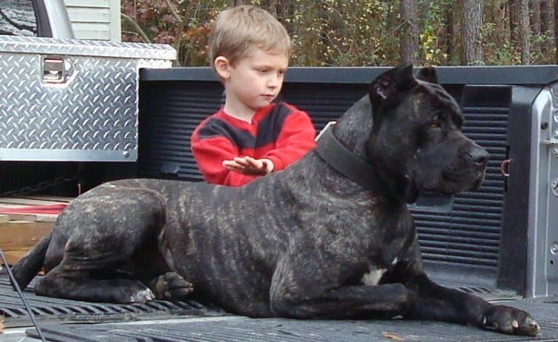 Most Muscular Dog Breed Pound For Pound