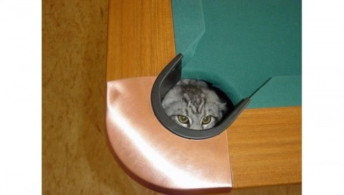 10 Awesome Cats Who Thought They Were Ninjas