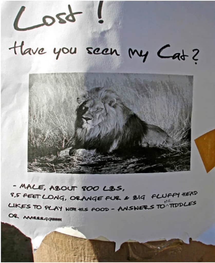 Funny Lost Cat Signs