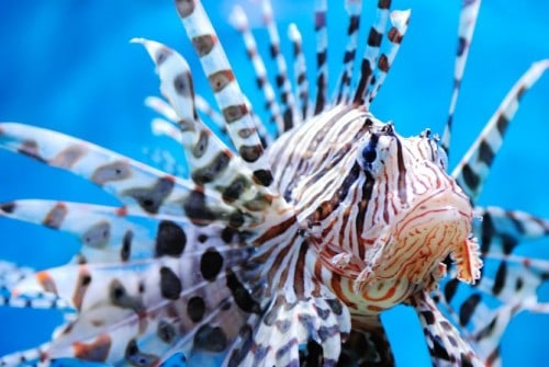 10 Of the Most Invasive Creatures To Ever Exist