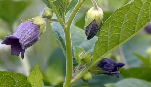 10 Deadliest Plants From Around The World