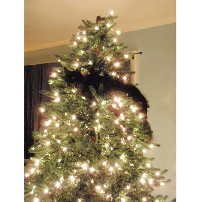 Are Christmas Trees Bad For Cats: 10 Hilarious Cats Climbing On Christmas Trees