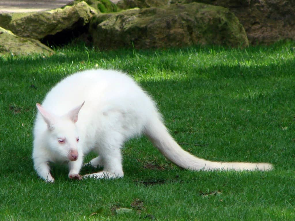 10 Of The Coolest Albino Animals You Ll Ever See