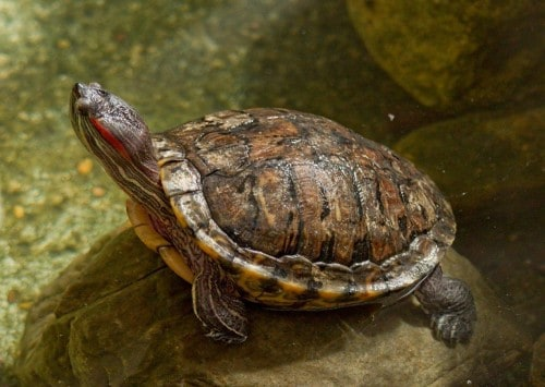 10 Truly Impressive Facts About Turtles And Tortoises