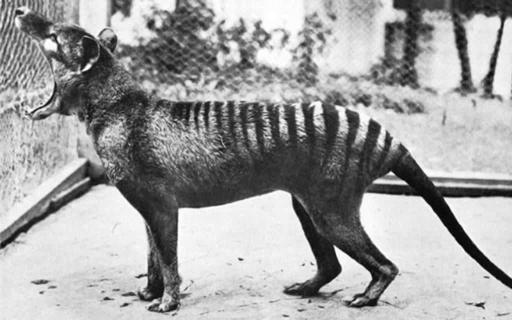 10 Animals That Went Extinct Recently