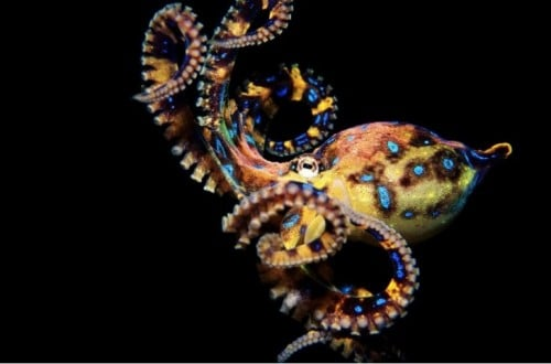 10 Crazy Facts About Octopuses You Probably Don't Know