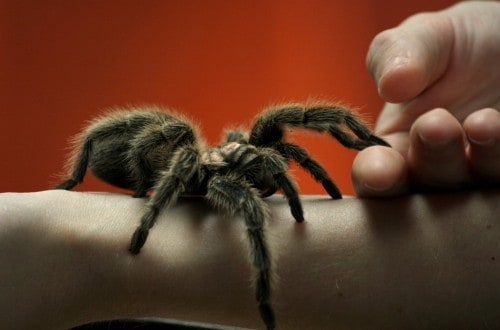 10 Fascinating Tidbits About Everyone's Favorite Eight-Legged Freaks