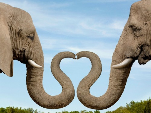 10 Impressive Facts About The Massive Elephants Of The Wild