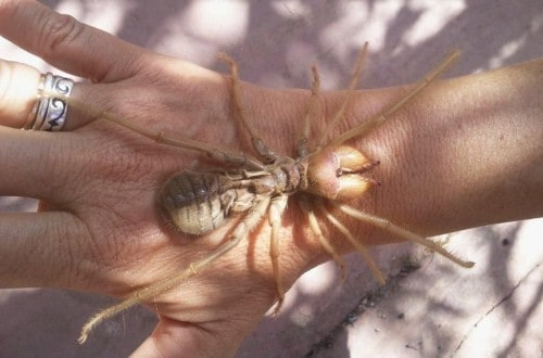 10 Of The Most Terrifying Spiders In The World